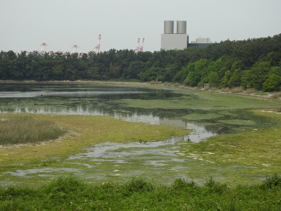Oosakanannkou4995